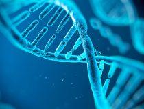 Cual es la función del ADN